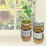 PL-3896 - Sunflower-In-A-Can